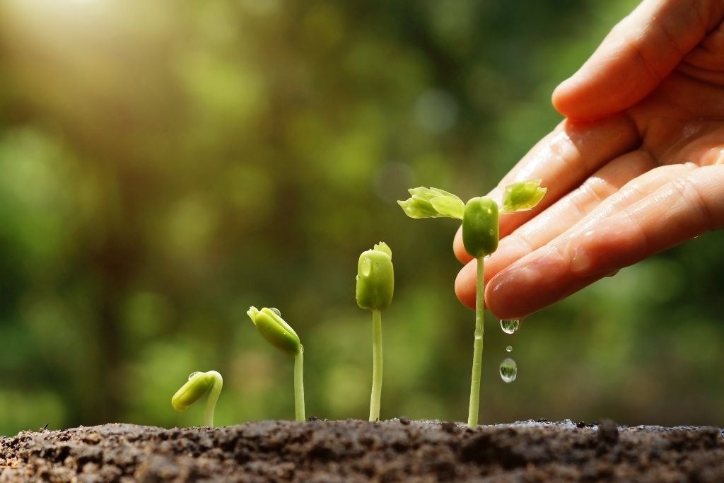 Seeds sprouting from the soil to become trees